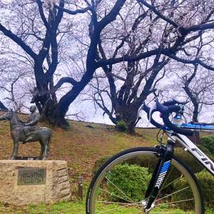 黄金堤に自転車で