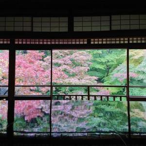 2020 秋の京都 『瑠璃光院(京都市左京区)』 GOTO利用で行ってきました。