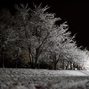 自然が教える季節の移ろい <立冬のご挨拶>