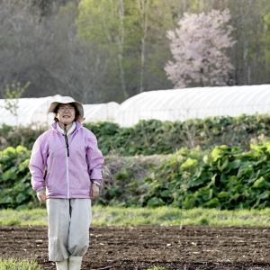芽、さあ来い! 畑完成ナリ。 <朝獲りアスパラの ご案内>