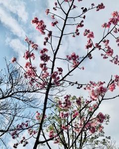 新型コロナウィルス、首都緊急宣言におきまして3月いっぱいサロンはお休みさせていただきます!