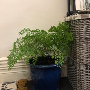 友達の家の観葉植物