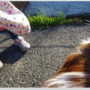 蓮は「犬?」「猫?」…初めて聞かれた、どっちかな(^-^;