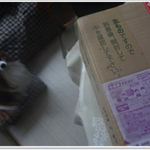 だってそこにハコがあるから・・・(^-^)~うまうま三昧♪ありがとう(*^▽^*)