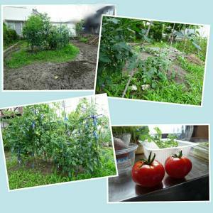 ここでも…トマトとそれから…(^-^)