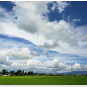 越後の田園風景~満願寺のはさ木並木