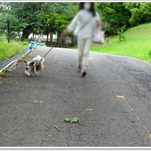 ルンルン散歩♪たのし~いね(#^.^#)
