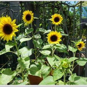 ただいま庭は夏真っ盛り!