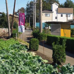 横浜近郊野菜
