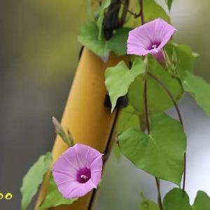 散歩で見かけた植物