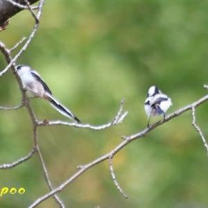 福岡城址の野鳥たち