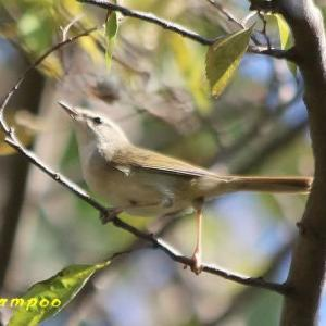 あちこちで出会った野鳥たち」