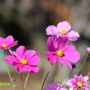 福岡城祉と大濠公園周辺の植物