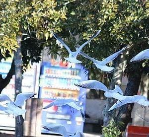 大濠公園の水鳥たち