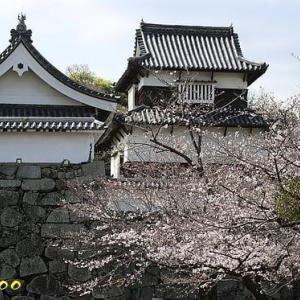 福岡城址の桜とオオバコ科の花