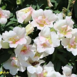 散歩で見かけた花たち