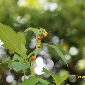 可哀相な名前の植物色々