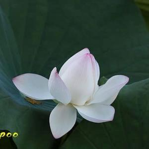 福岡城址の花たち
