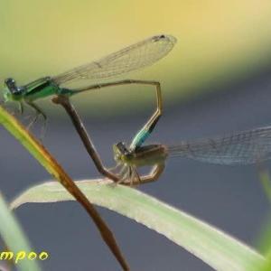 小さな池の虫たち