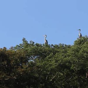 福岡城址で出会った生き物たち