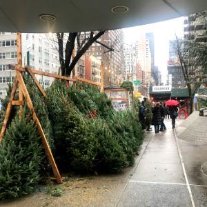 ♡今年ももみの木を購入しました♡