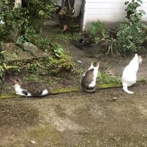 私は猫を連れたパラサイト