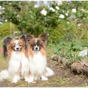 公園のはしご…きづしづちゃん姉妹と一緒にお散歩