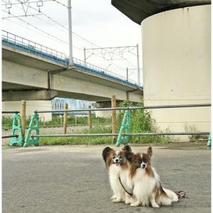 朝んぽで横歩きするアイツに興味津々(#^.^#)