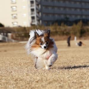 飛んでも飛ばなくても走る姿を見るのは楽しい♪