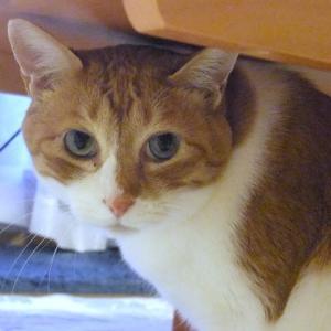 久しぶりに猫登場…今日は太郎の日💛