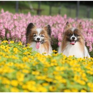 真夏のお花畑…時の流れを感じました