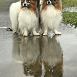 雨上がりの散歩の楽しみと言ったらこれしかない!(笑)
