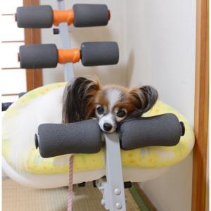 猛暑続きで運動不足なので…