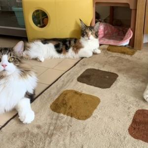 お年寄り猫と子猫はうまく暮らせるか?・・・・・卒業生通信♪