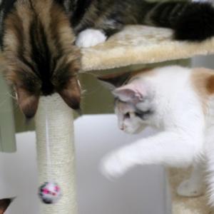 行くべきか行かざるべきか・・・・・子猫通信♪