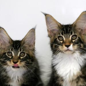 子猫のポートレート・・・・団子3兄弟♪