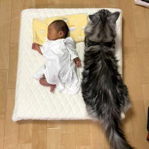 赤ちゃんと猫・・・・・楽しい定点観測♪