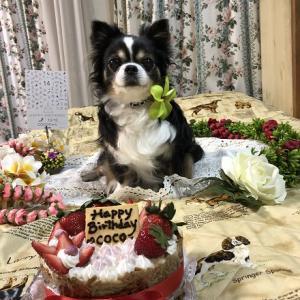 数日前に愛犬が亡くなりました。