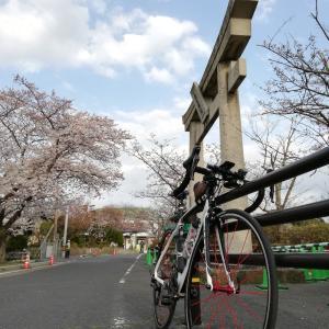 自転車に花は舞う!RL8初ライド