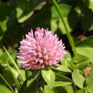 千葉九十九里|東山佐知子講師の3月のハーブ講座は、解毒ハーブと野草がテーマです