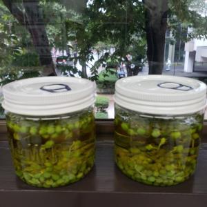 9月の漢方入門講座は山椒オイルを作りました