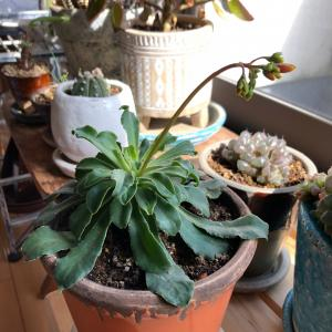 今日の植物と刺繍の記録