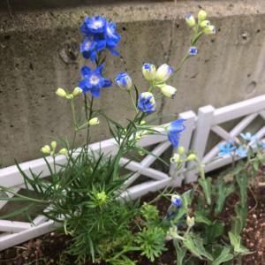 ブルー系のお花、バジル、色々、刺繍の記録