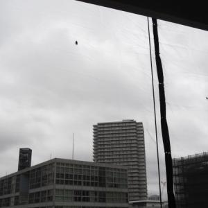 梅雨空のセミ