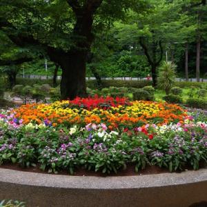 梅雨の花壇