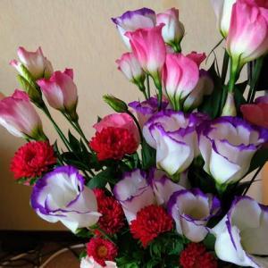 アスターの花など