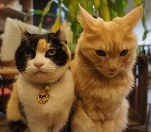ネコに毛つくろいしてもらう、オジサンの動画。