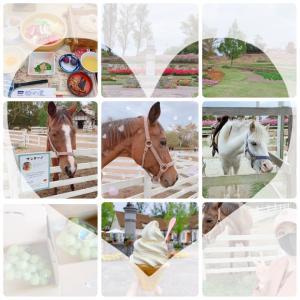 松茸と馬と524