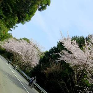 箱根・芦ノ湖へ花見ツーリング