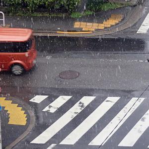 東京は桜が開花して雪が降りました! 「チャオチャオレタス」と「リバーグリーンレタス」苗!